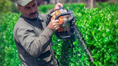 Photo of صباح الخير من معبر باب الهوى