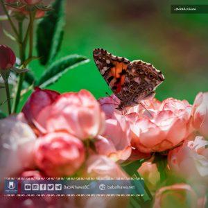 فراشة في حديقة معبر باب الهوى - سوريا