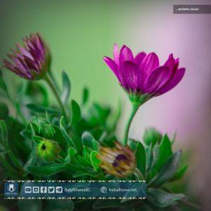أزهار في حديقة معبر باب الهوى - سوريا