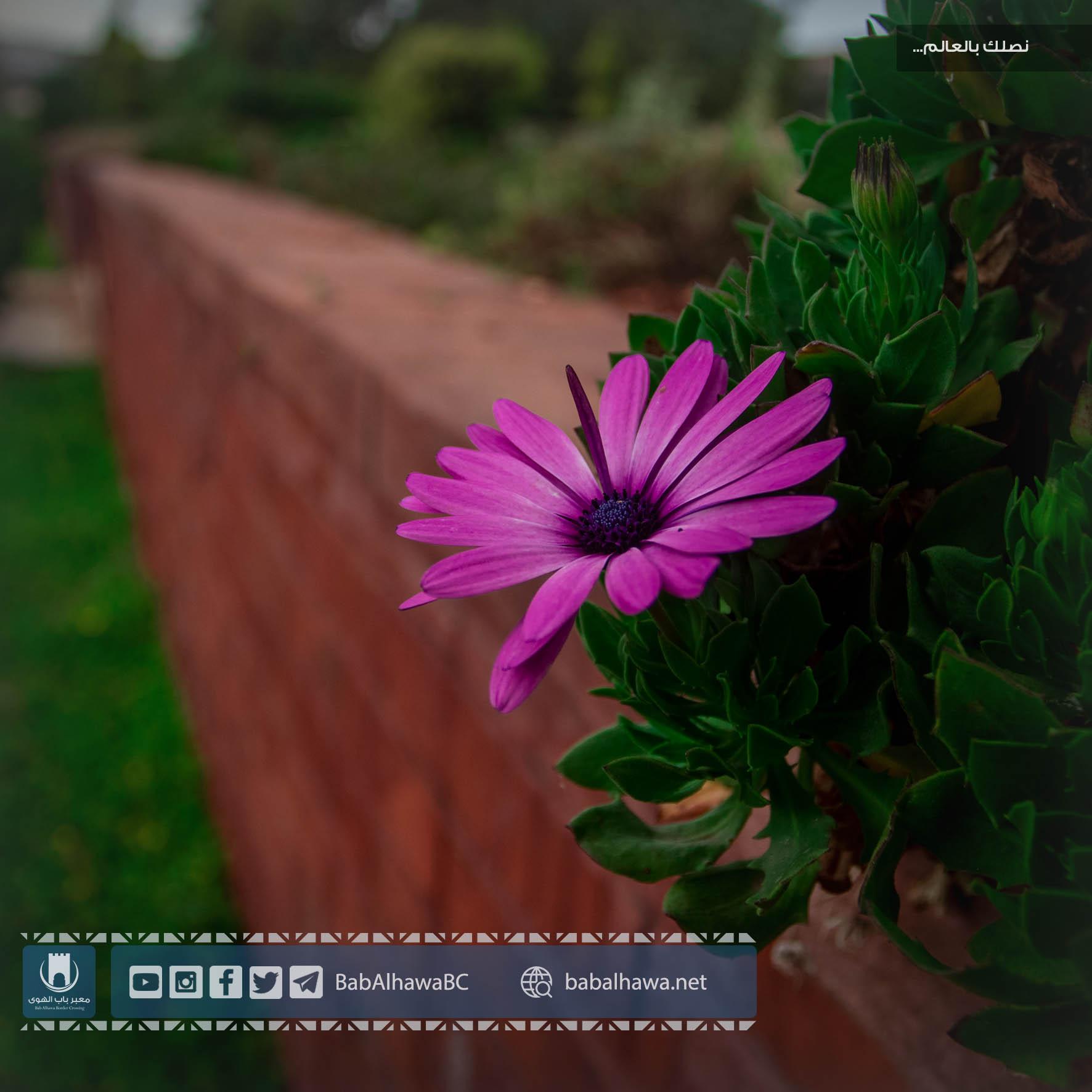 زهرة في حديقة معبر باب الهوى - سوريا 2019