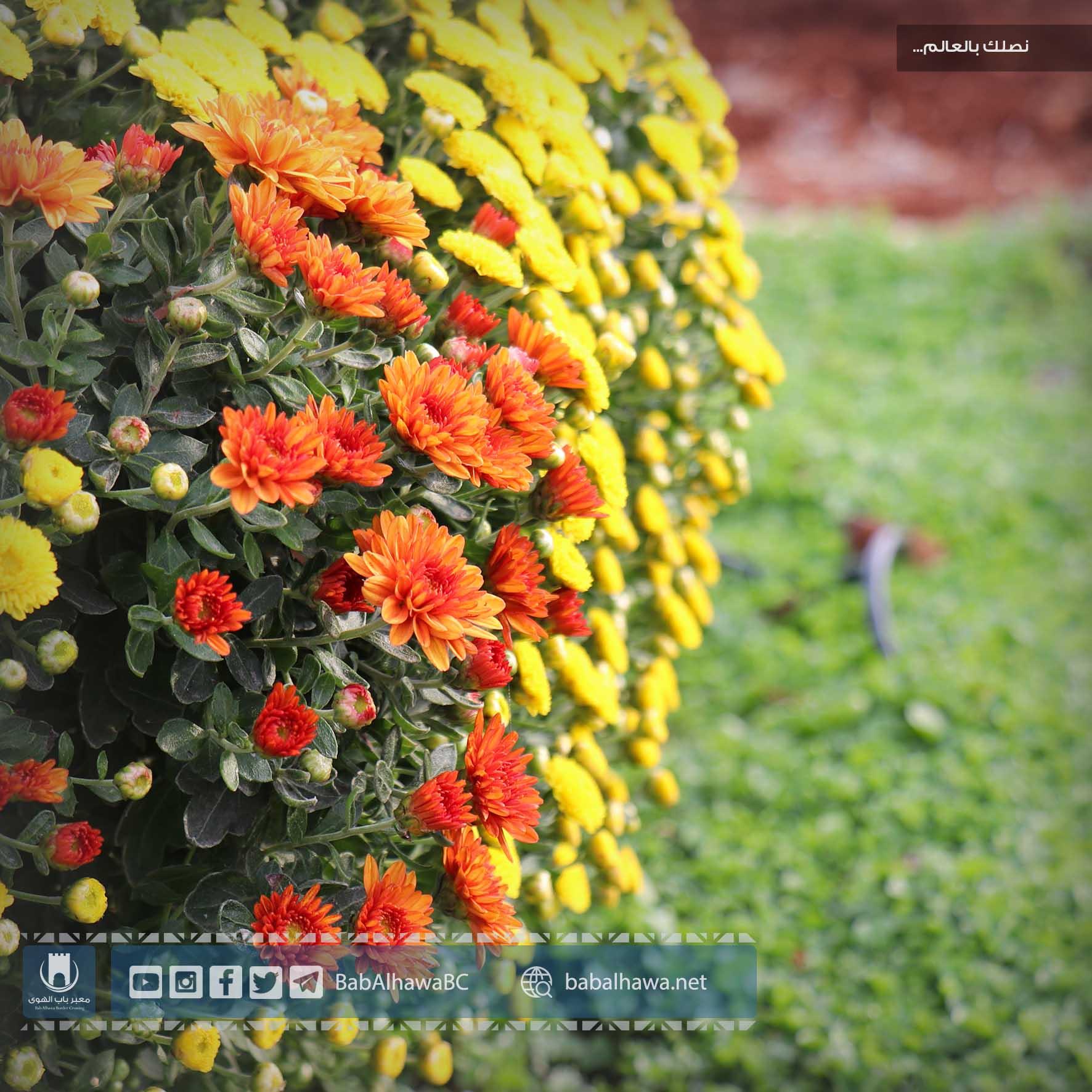 أزهار في حديقة معبر باب الهوى - سورية
