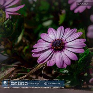 زهرة في حديقة معبر باب الهوى - سورية