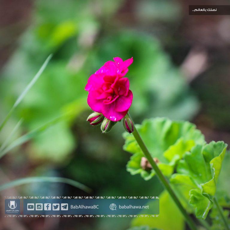 Photo of صباح الخير من معبر باب الهوى سوريا