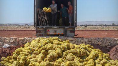 Photo of إتلاف شحنة من مادة البطاطا مخالفة للمواصفات القياسية المعتمدة